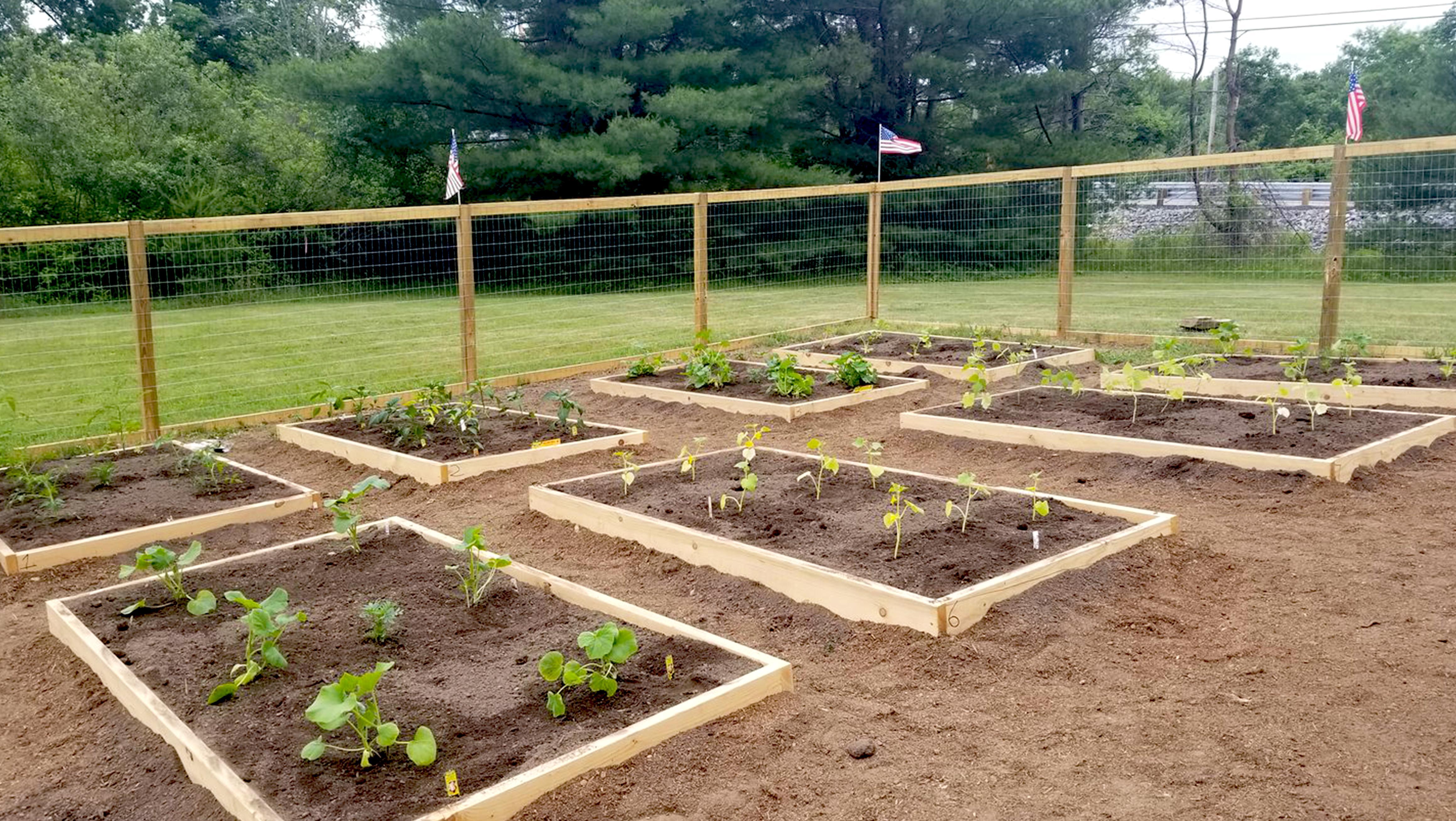 garden10
