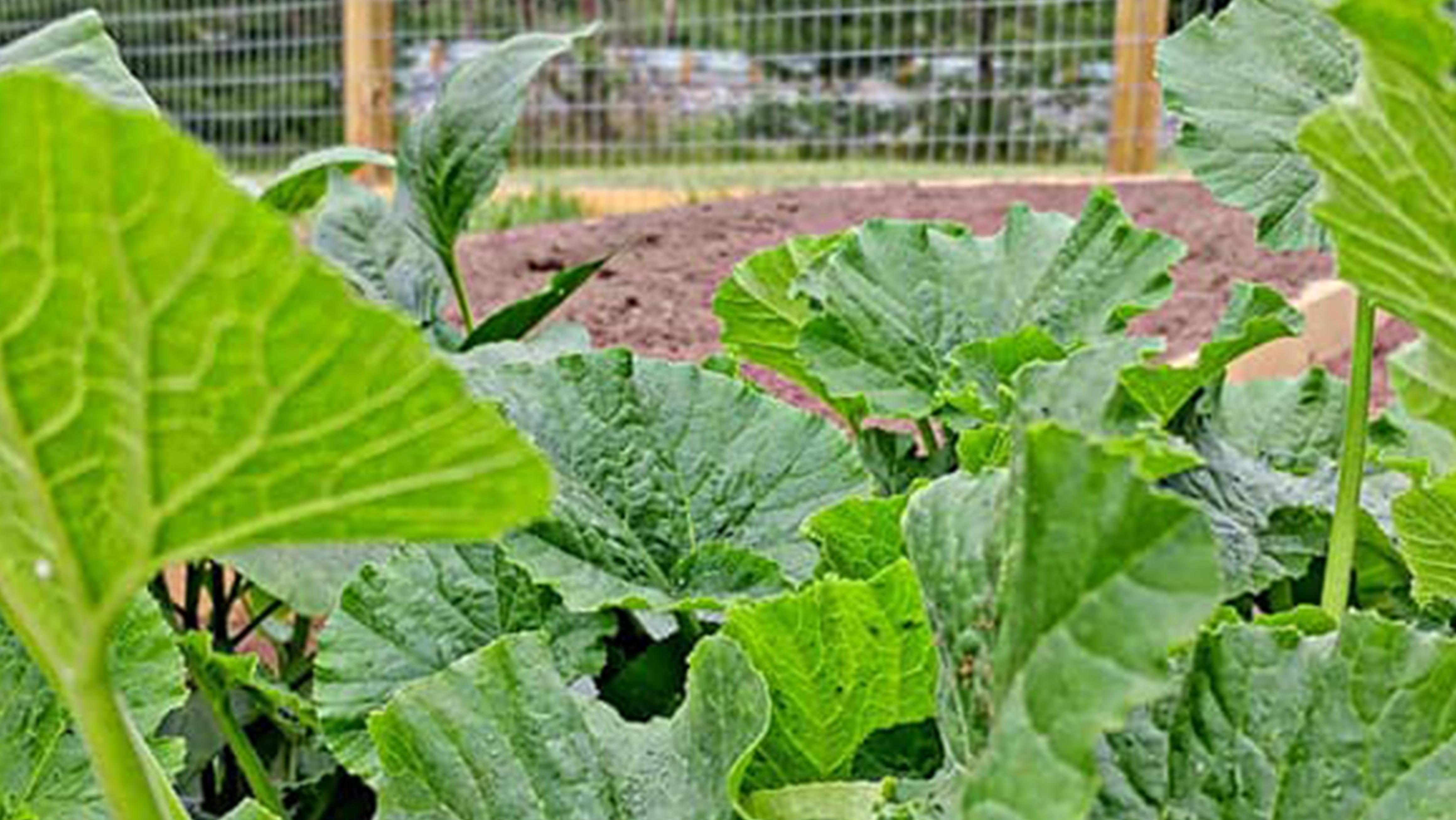garden8